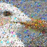 Seagull Photographic Mosaic