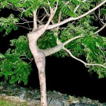 Dancing Tree Optical Illusion