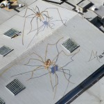 Arachnids Overshadow Seattle by Marlin Peterson