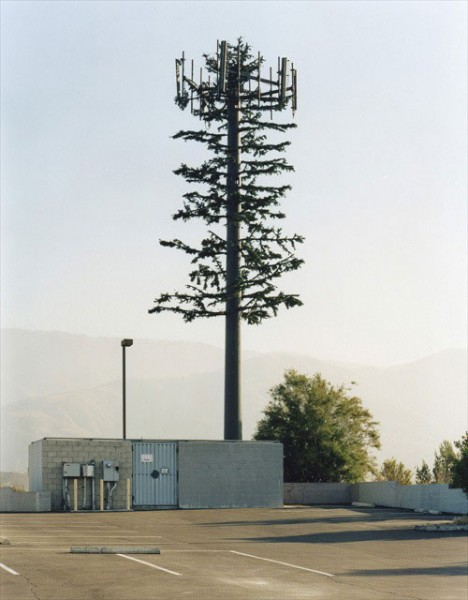 Cell Phone Tower Tree #4