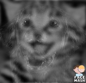Kitten Dog Face Mash