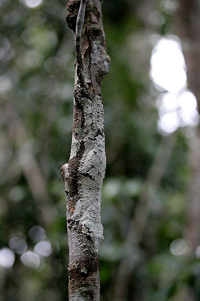 Camouflaged Animal