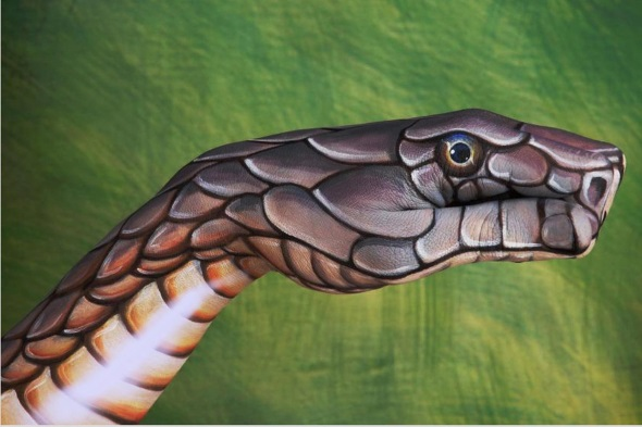 Cobra by Guido Daniele