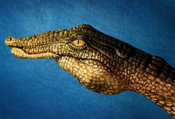 Crocodile by Guido Daniele