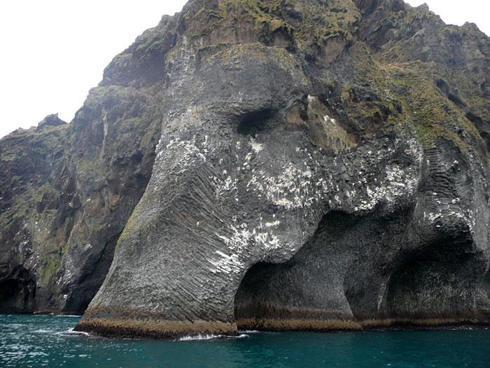 Sea Elephant #3