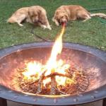 Fire Breathing Dog Optical Illusion